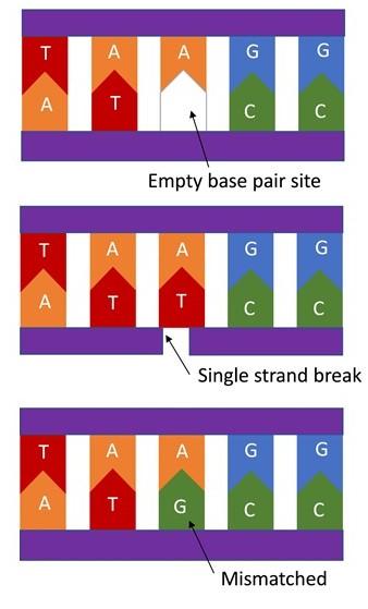DNA Damage2.jpg